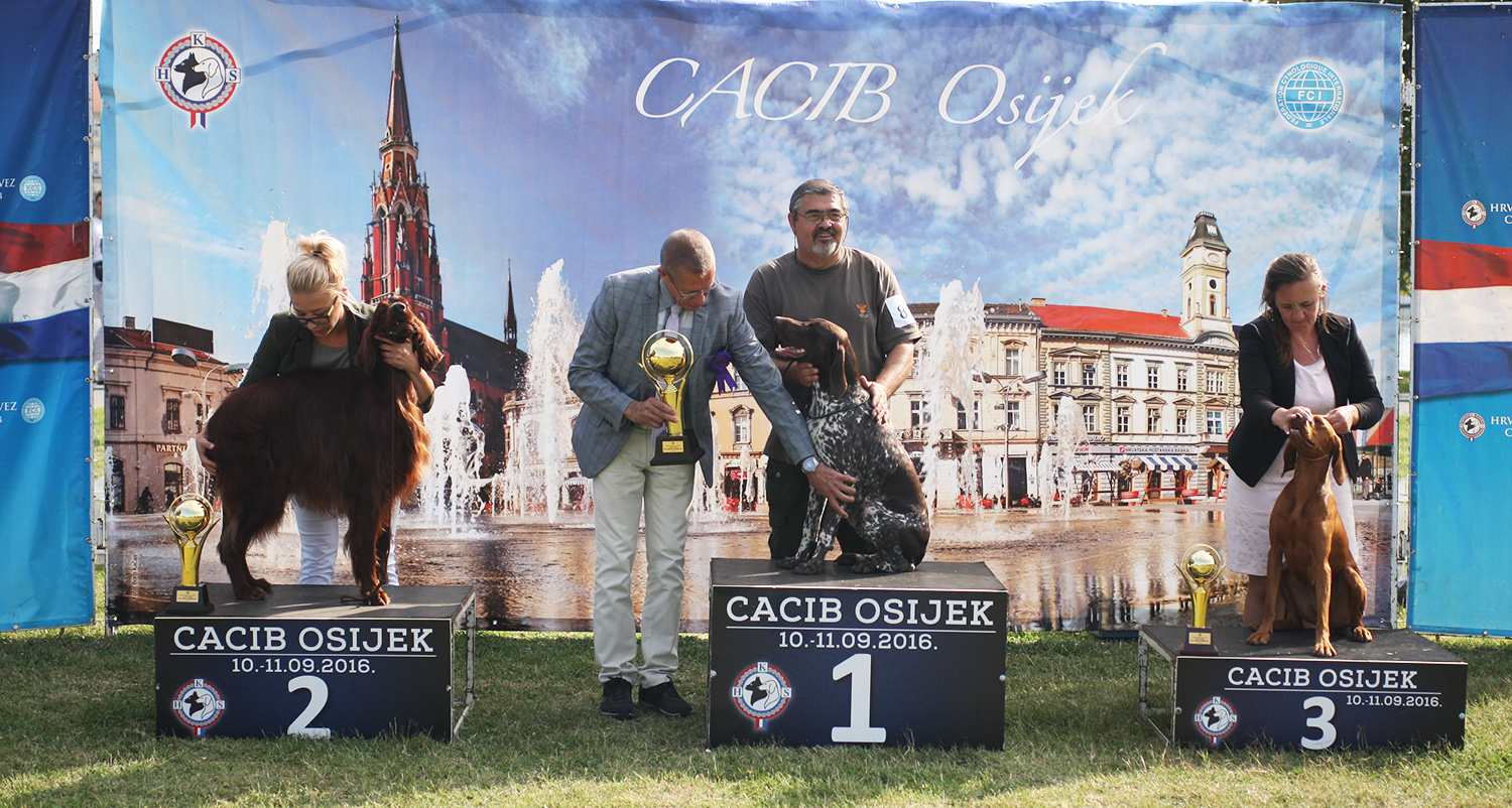The Best Hunting Dog - Working Class - BIS IDS Osijek (Croatia), Sunday, 11 September 2016