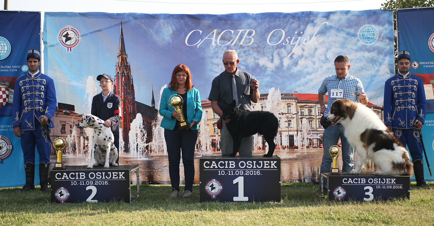 Best Croatian breed - BIS IDS Osijek (Croatia), Sunday, 11 September 2016