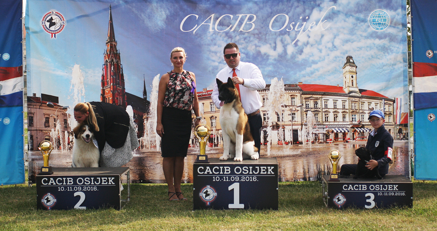 Best Puppy - BIS IDS Osijek (Croatia), Sunday, 11 September 2016