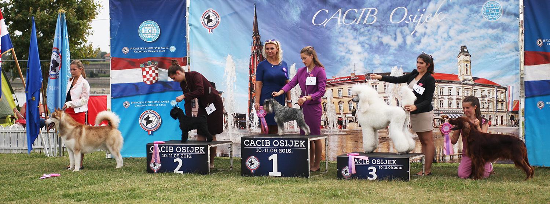 Юный хэндлер, 14-17 лет - BIS CACIB Осиек (Хорватия), суббота, 10 сентября 2016 года (фото)