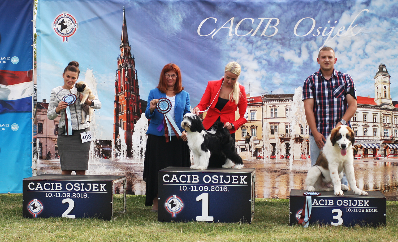 Лучший бэби - BIS CACIB Осиек (Хорватия), суббота, 10 сентября 2016 года (фото)