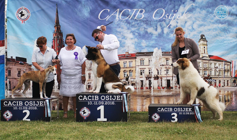 Лучший щенок - BIS CACIB Осиек (Хорватия), суббота, 10 сентября 2016 года (фото)
