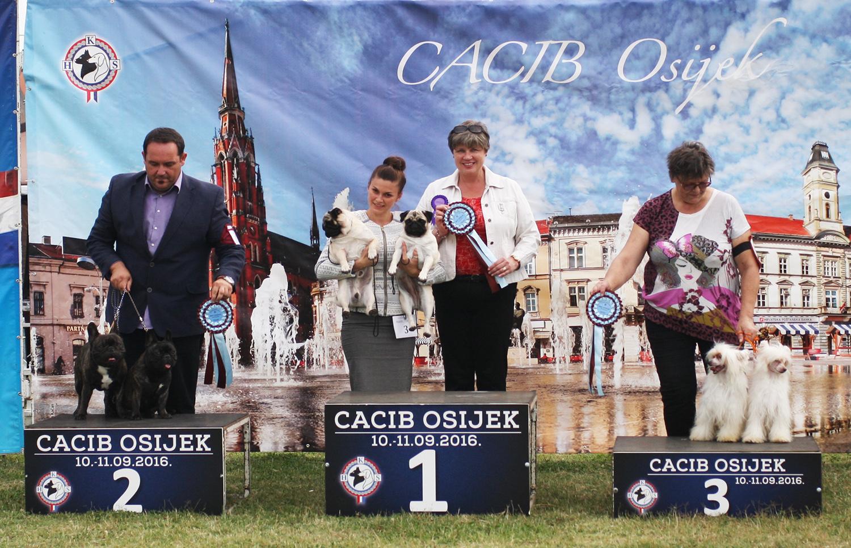 Лучшая пара - BIS CACIB Осиек (Хорватия), суббота, 10 сентября 2016 года (фото)