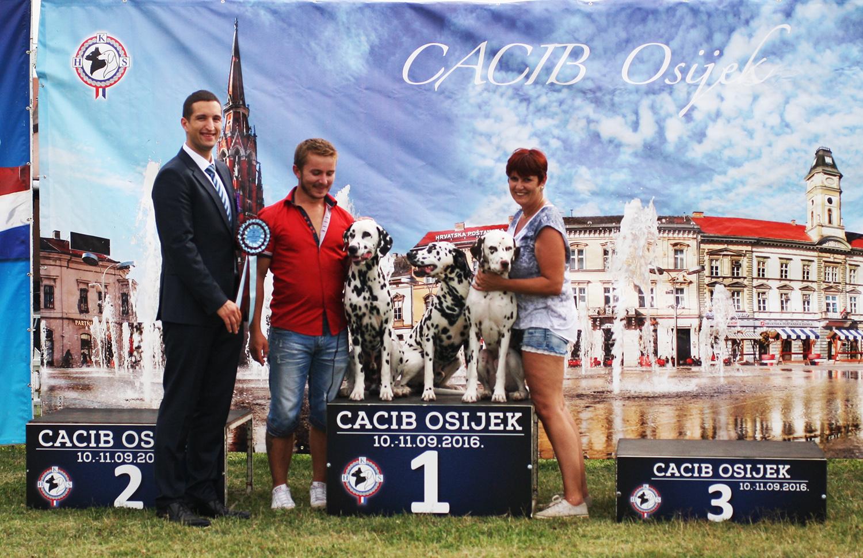 Лучший заводчик - BIS CACIB Осиек (Хорватия), суббота, 10 сентября 2016 года (фото)