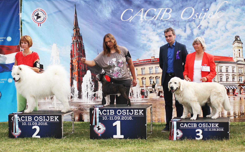 Лучший ветеран - BIS CACIB Осиек (Хорватия), суббота, 10 сентября 2016 года (фото)