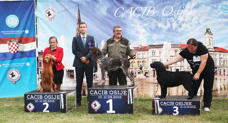 Лучшая охотничья собака- рабочий класс - BIS CACIB Осиек (Хорватия), суббота, 10 сентября 2016 года (фото)