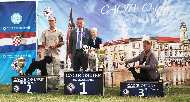 Лучший юниор - BIS CACIB Осиек (Хорватия), суббота, 10 сентября 2016 года (фото)