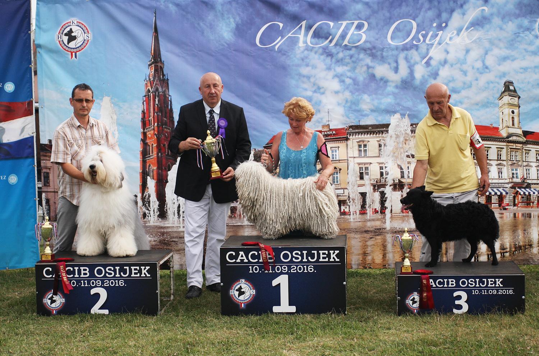 Группа FCI I - BIS CACIB Осиек (Хорватия), суббота, 10 сентября 2016 года (фото)