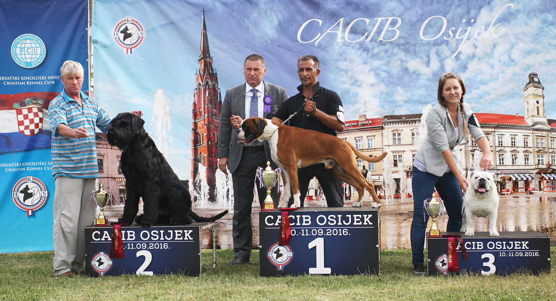 Группа FCI II - BIS CACIB Осиек (Хорватия), суббота, 10 сентября 2016 года (фото)