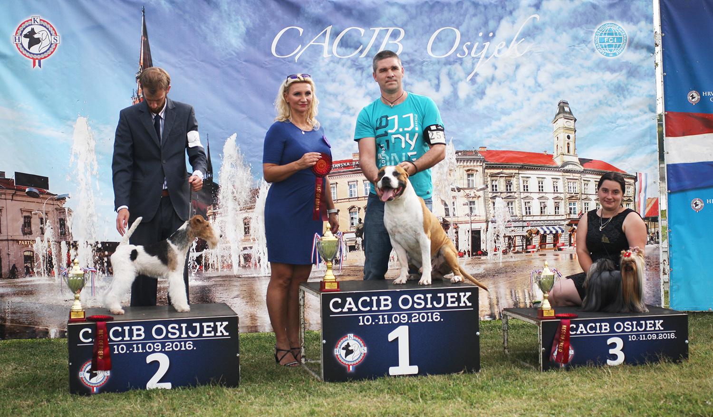Группа FCI III - BIS CACIB Осиек (Хорватия), суббота, 10 сентября 2016 года (фото)