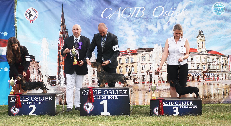 Группа FCI IV - BIS CACIB Осиек (Хорватия), суббота, 10 сентября 2016 года (фото)