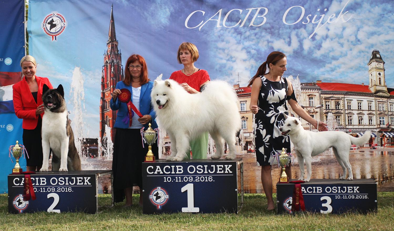 FCI group V - BIS IDS Osijek (Croatia), Saturday, 10 September 2016 (Photo)