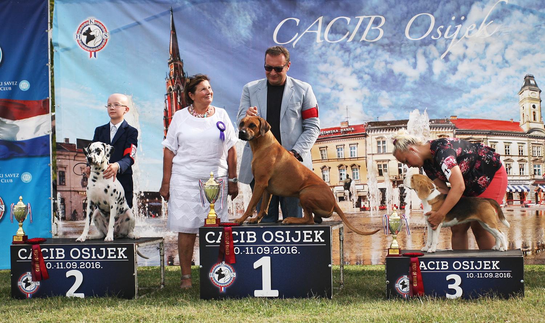 Группа FCI VI - BIS CACIB Осиек (Хорватия), суббота, 10 сентября 2016 года (фото)