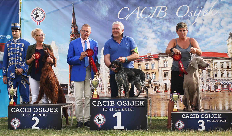 Группа FCI VII - BIS CACIB Осиек (Хорватия), суббота, 10 сентября 2016 года (фото)