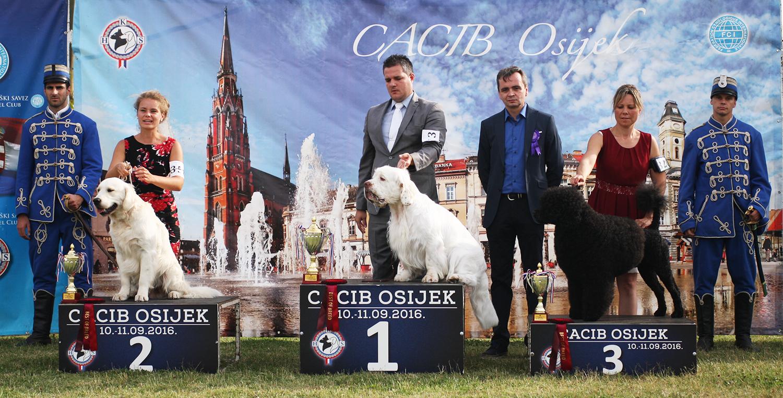 Группа FCI VIII - BIS CACIB Осиек (Хорватия), суббота, 10 сентября 2016 года (фото)