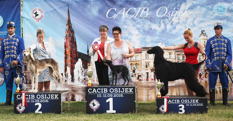 Группа FCI X - BIS CACIB Осиек (Хорватия), суббота, 10 сентября 2016 года (фото)