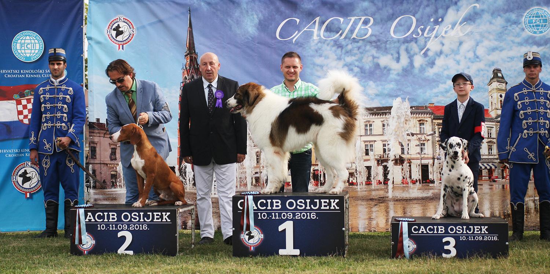 Лучшая хорватская порода - BIS CACIB Осиек (Хорватия), суббота, 10 сентября 2016 года (фото)