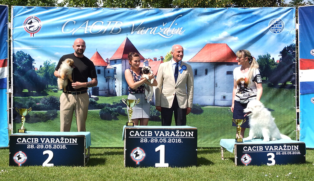 Best Minor Puppy - BIS CACIB Varaždin (Croatia), Sunday, 29 May 2016 (photo)