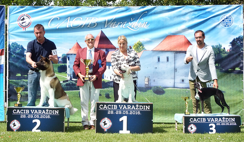 Best Puppy - BIS CACIB Varaždin (Croatia), Sunday, 29 May 2016 (photo)