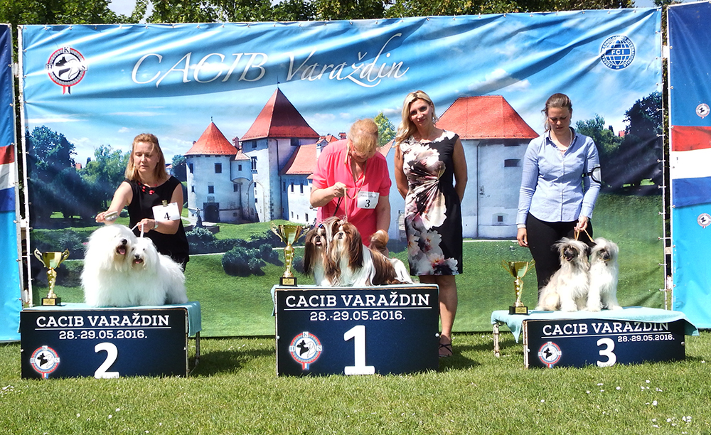 Best Brace - BIS CACIB Varaždin (Croatia), Sunday, 29 May 2016 (photo)