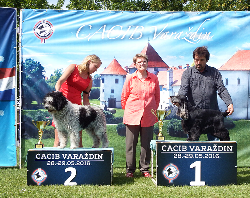 Best Veteran - BIS CACIB Varaždin (Croatia), Sunday, 29 May 2016 (photo)