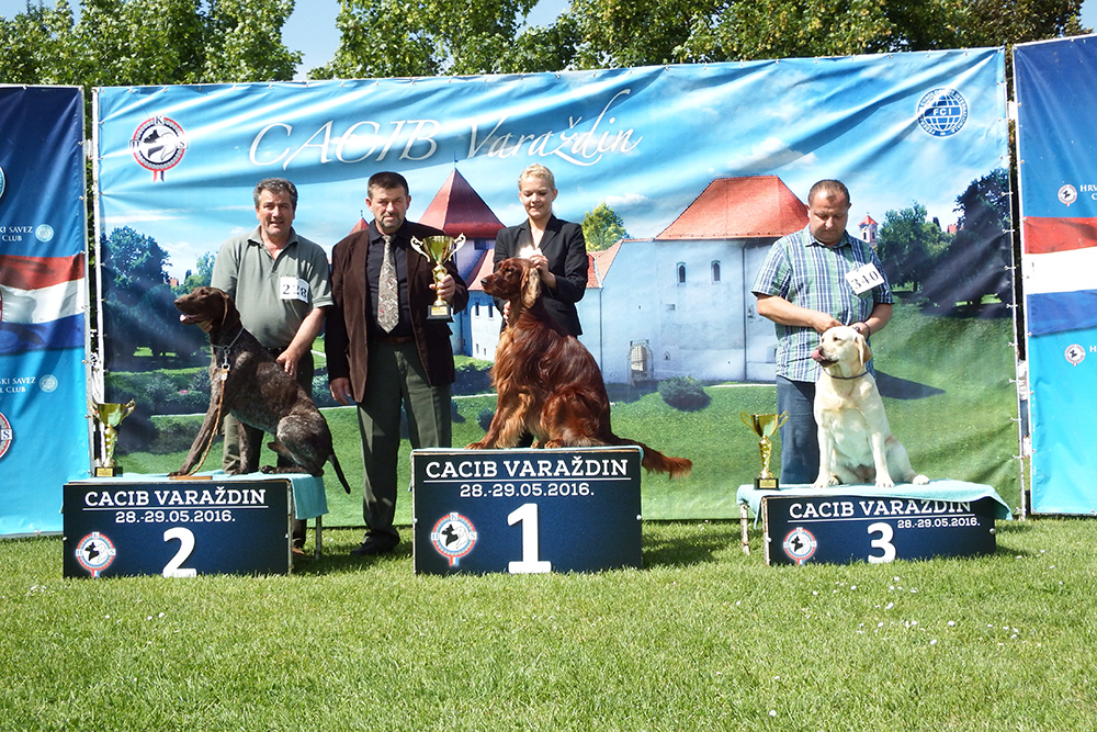 Best Hunting Breed - BIS CACIB Varaždin (Croatia), Sunday, 29 May 2016 (photo)