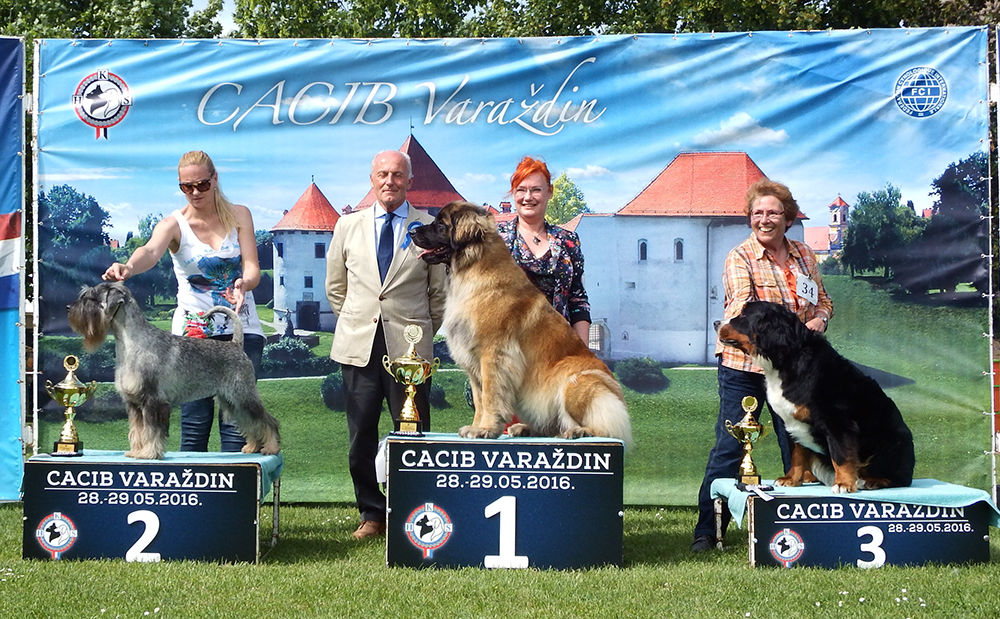 FCI Group II - BIS CACIB Varaždin (Croatia), Sunday, 29 May 2016 (photo)