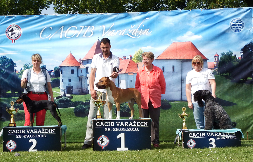 FCI Group III - BIS CACIB Varaždin (Croatia), Sunday, 29 May 2016 (photo)