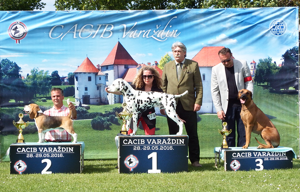 FCI Group VI - BIS CACIB Varaždin (Croatia), Sunday, 29 May 2016 (photo)