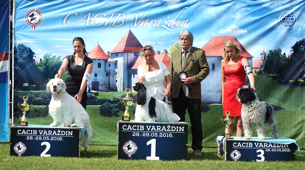 FCI Group VIII - BIS CACIB Varaždin (Croatia), Sunday, 29 May 2016 (photo)