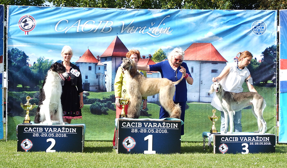 FCI Group X - BIS CACIB Varaždin (Croatia), Sunday, 29 May 2016 (photo)