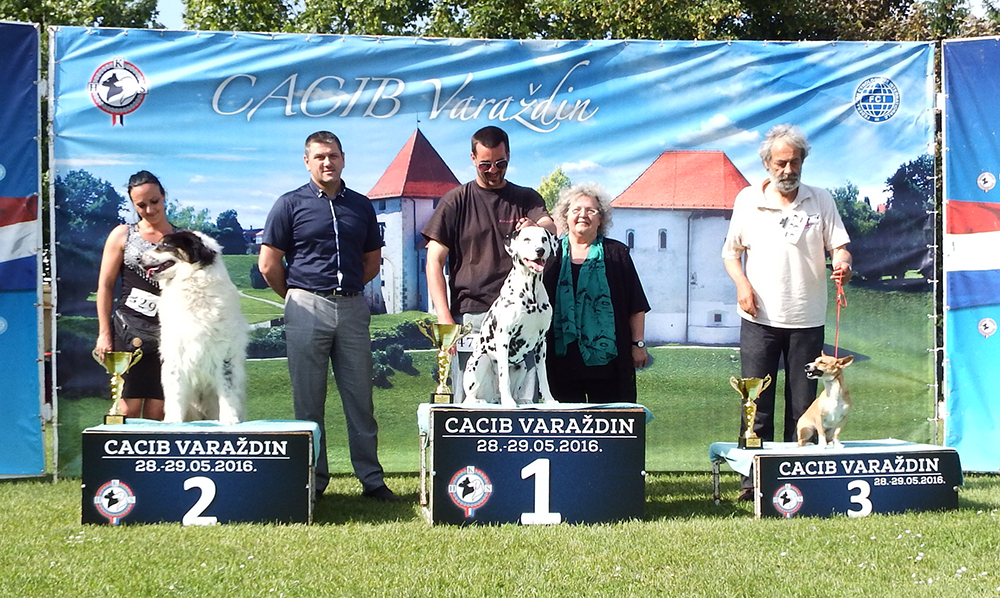 Best Croatian Native Breed - BIS CACIB Varaždin (Croatia), Sunday, 29 May 2016 (photo)