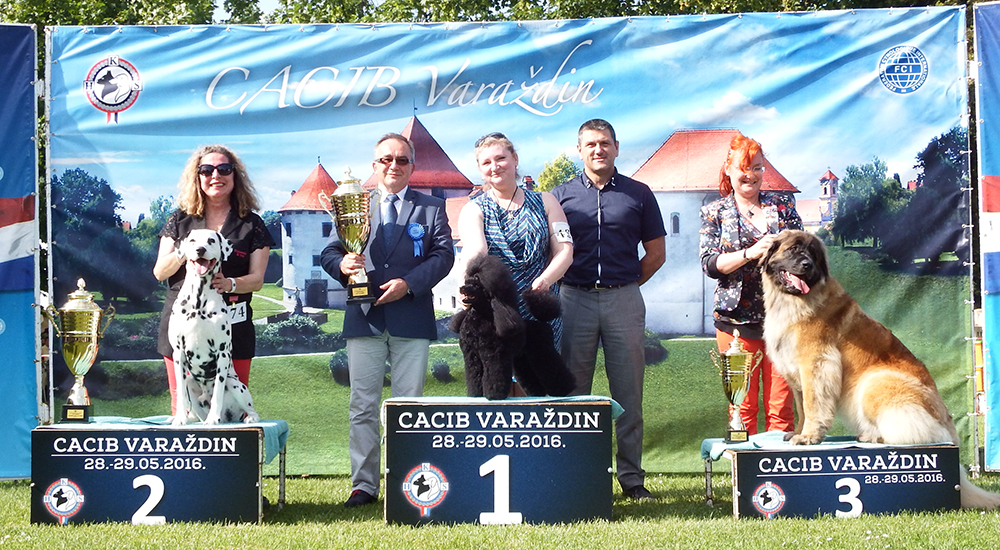 Best in Show (BIS) - BIS CACIB Varaždin (Croatia), Sunday, 29 May 2016 (photo)