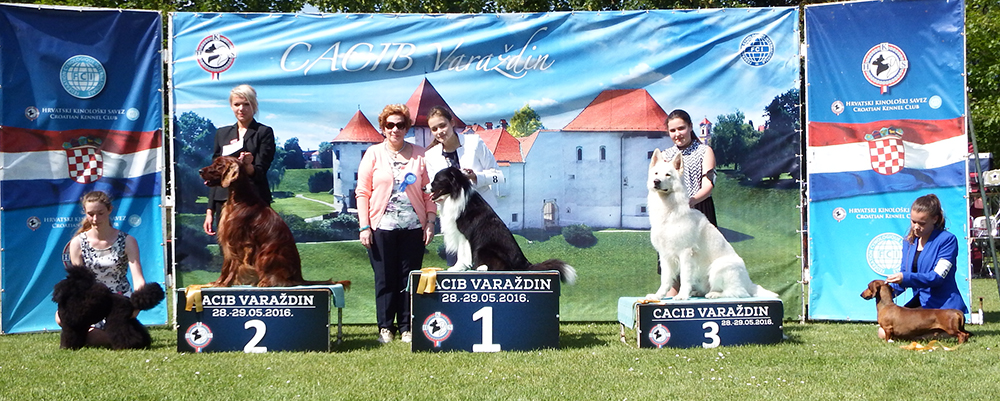 Best Junior Handler Older Group - BIS CACIB Varaždin (Croatia), Saturday, 28 May 2016 (photo)