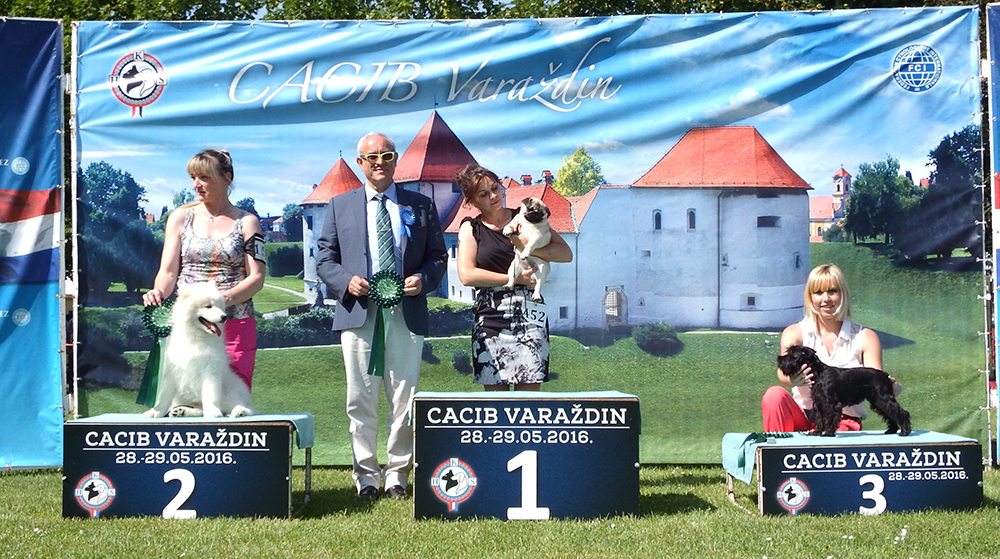 Best Minor Puppy - BIS CACIB Varaždin (Croatia), Saturday, 28 May 2016 (photo)