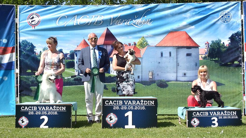 Лучший бэби - BIS CACIB Вараждин (Хорватия), суббота, 28 мая 2016 года (фото)