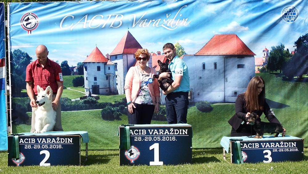 Лучший щенок - BIS CACIB Вараждин (Хорватия), суббота, 28 мая 2016 года (фото)