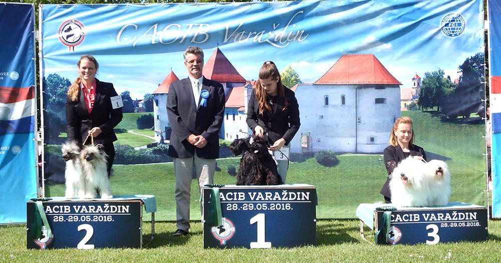 Лучшая пара - BIS CACIB Вараждин (Хорватия), суббота, 28 мая 2016 года (фото)