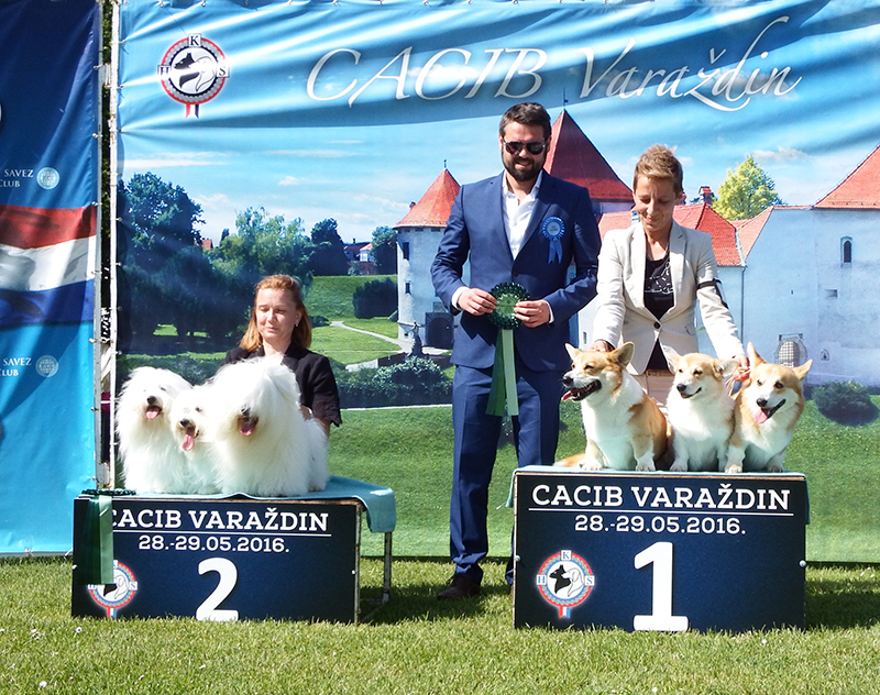 Best Breeders' Group - BIS CACIB Varaždin (Croatia), Saturday, 28 May 2016 (photo)