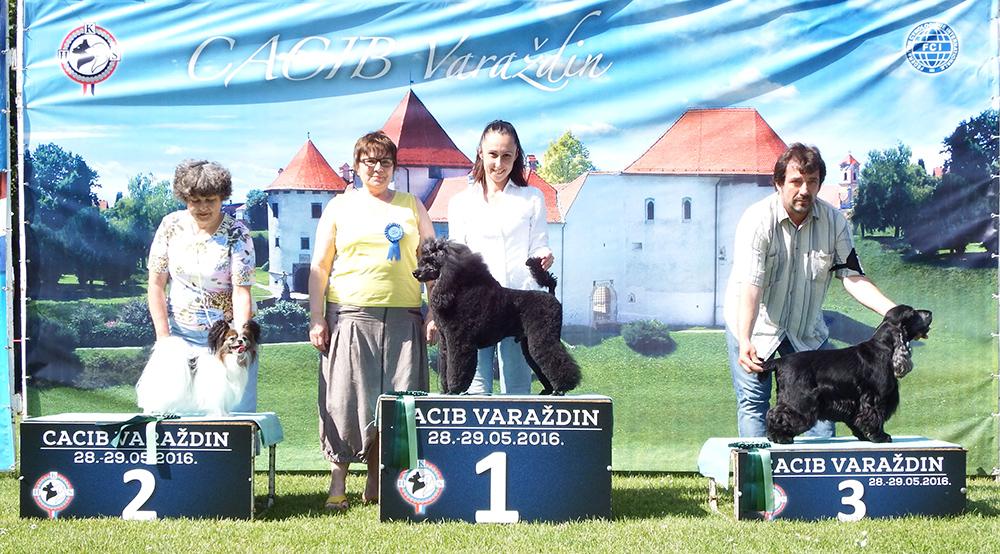 Лучший ветеран - BIS CACIB Вараждин (Хорватия), суббота, 28 мая 2016 года (фото)