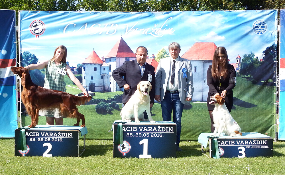 Best Hunting Breed - BIS CACIB Varaždin (Croatia), Saturday, 28 May 2016 (photo)