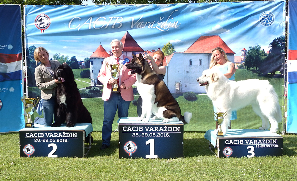 Best Junior - BIS CACIB Varaždin (Croatia), Saturday, 28 May 2016 (photo)
