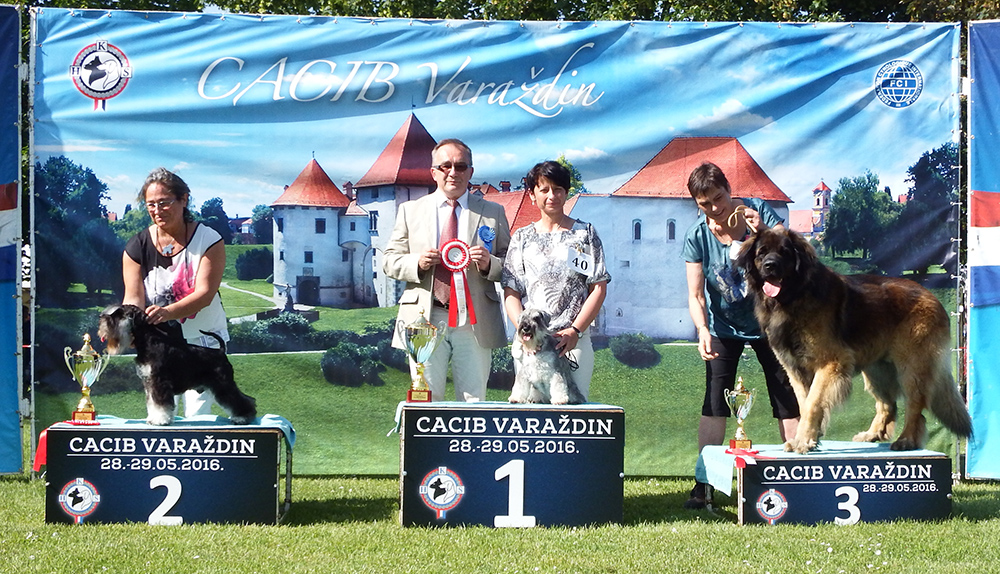 FCI Group II - BIS CACIB Varaždin (Croatia), Saturday, 28 May 2016 (photo)