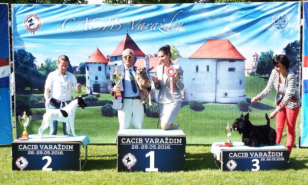 Группа FCI III - BIS CACIB Вараждин (Хорватия), суббота, 28 мая 2016 года (фото)