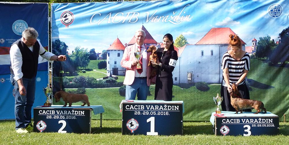 Группа FCI IV - BIS CACIB Вараждин (Хорватия), суббота, 28 мая 2016 года (фото)