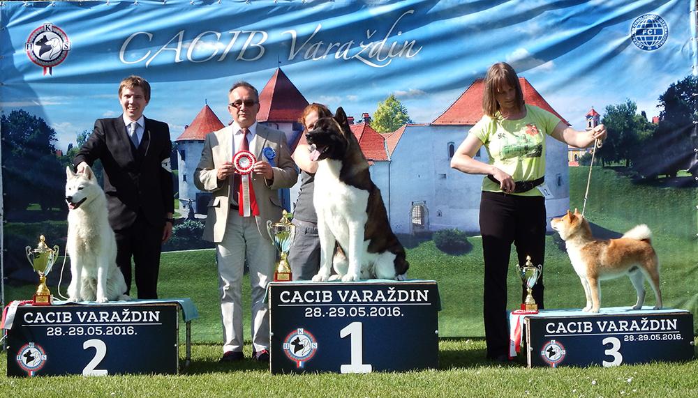 Группа FCI V - BIS CACIB Вараждин (Хорватия), суббота, 28 мая 2016 года (фото)
