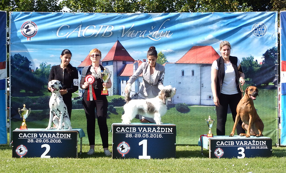 FCI Group VI - BIS CACIB Varaždin (Croatia), Saturday, 28 May 2016 (photo)