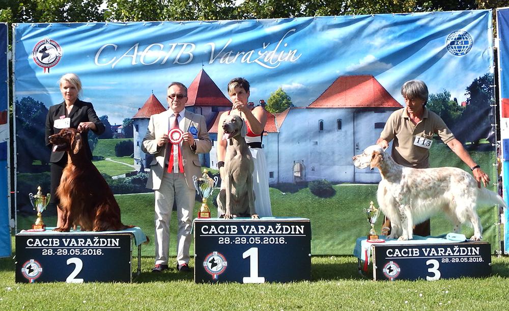 Группа FCI VII - BIS CACIB Вараждин (Хорватия), суббота, 28 мая 2016 года (фото)