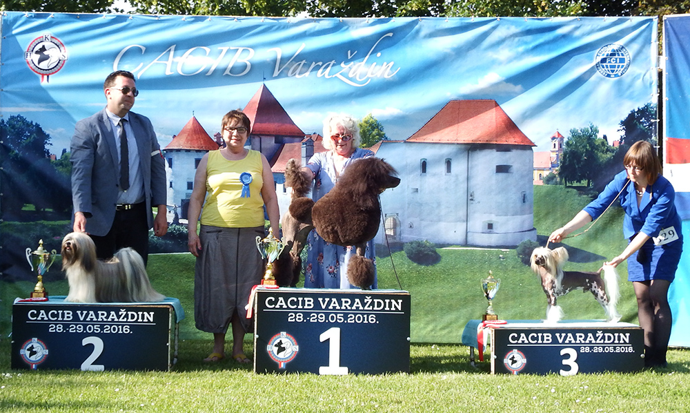 FCI Group IX - BIS CACIB Varaždin (Croatia), Saturday, 28 May 2016 (photo)