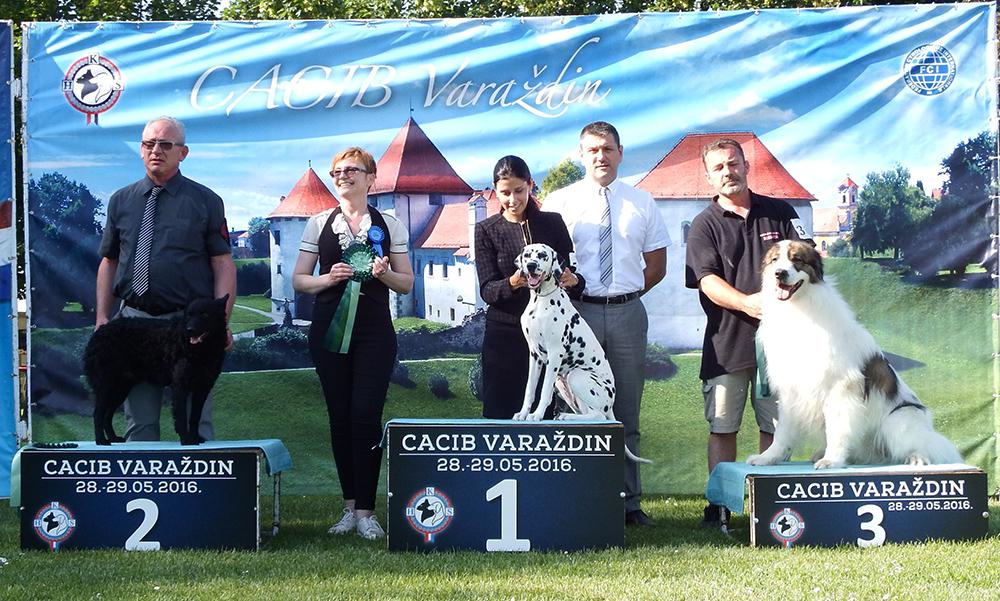 Лучшая хорватская порода - BIS CACIB Вараждин (Хорватия), суббота, 28 мая 2016 года (фото)
